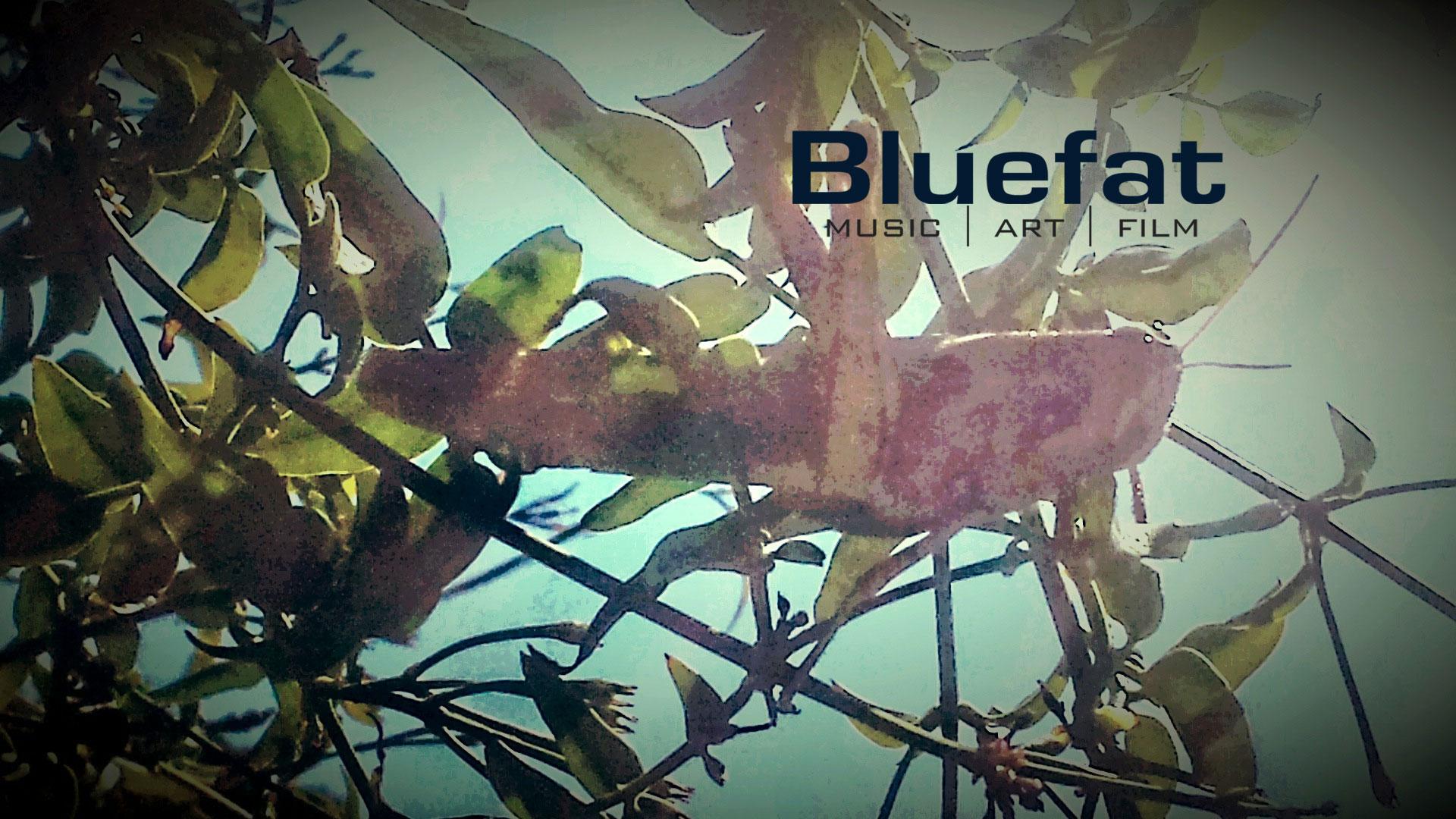 Bluefat